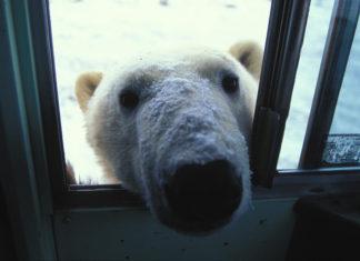 αστεία αρκούδα