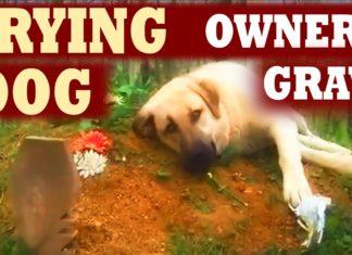 Σκύλος κλαίει