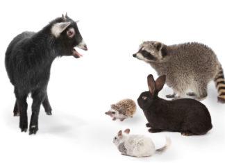 Ζώα που μιλάνε