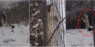 ΚΤΗΝΩΔΙΑ: Έδεσε τον σκύλο του σε χωράφι και το δύστυχο ζώο πέθανε από τον χιονιά