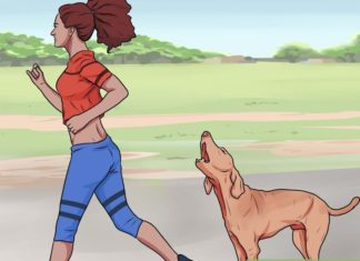 πως να αντιμετωπίσετε επίθεση σκύλου