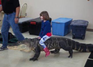 κοριτσάκι ιππεύει αλιγάτορα