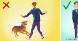 προστασία από επίθεση σκύλου