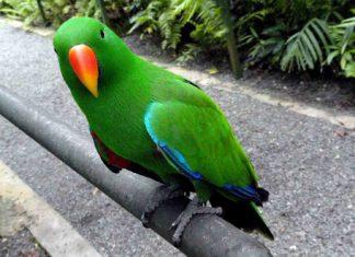 Ανέκδοτο: Πράσινο πουλί