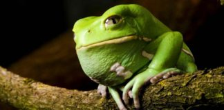 Ανέκδοτο: Βάτραχε, θα με παντρευτείς;