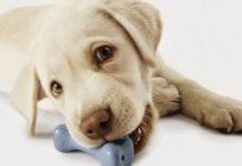 Φτιάξτε μόνοι σας παιχνίδια για τον σκύλο σας