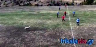 Απίστευτο! Παίχτες κυνηγούσαν προβατίνα την ώρα του αγώνα σε γήπεδο των Τρικάλων(vids)